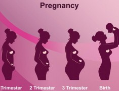 Stages of Pregnancy : A Guide For Each Month