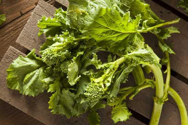 Broccoli Rabe