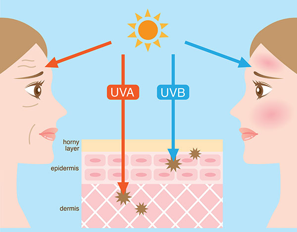 uv light on dna functions causes the skin cells to become damaged