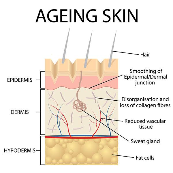 anti aging skin regimen