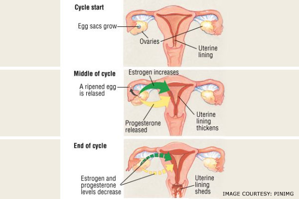 menopause cycle