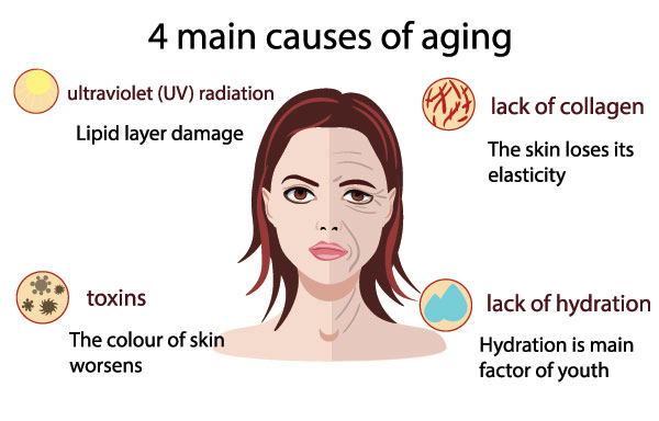 causes of skin to wrinkle with age